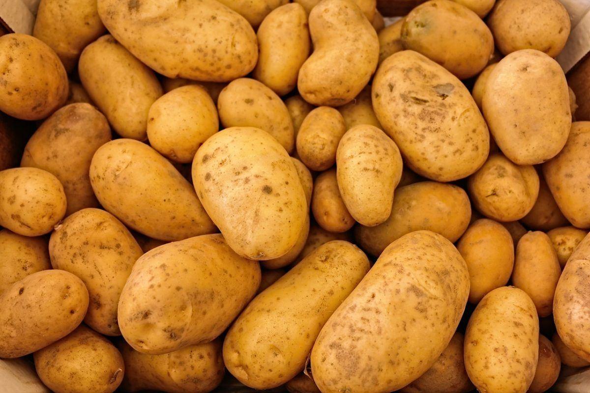 Another Potato Blog Post